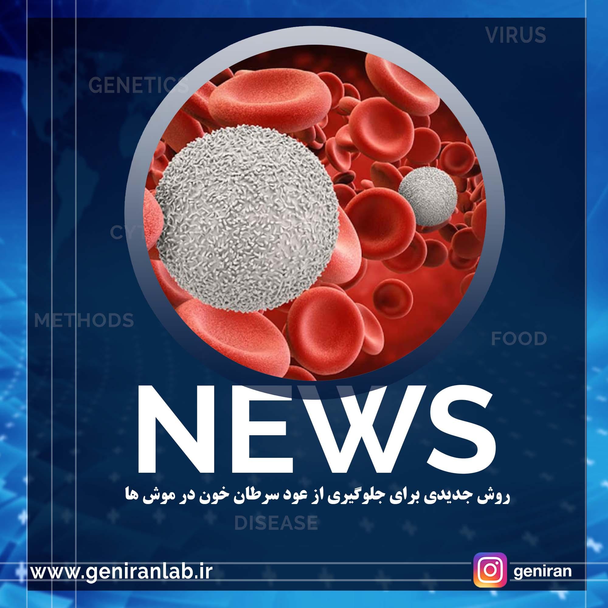 روش جدیدی برای جلوگیری از عود سرطان خون در موش ها